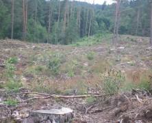 Nereikalingas miško kirtimas Vilniuje įsiutino žaliuosius: skųs Konstituciniam Teismui