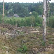 Liūdni vaizdai Kermušijos miškuose: ar tikrai jau pribrendome tapti miškų savininkais?