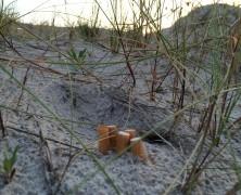 Tyrimas: Paplūdimiuose tuntai servetėlių ir nuorūkų