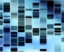 Apie mus rašo: Jei nepakenks pats GMO, pakenks chemikalai