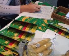 Parodos lankytojams bus atskleista pigių bananų paslaptis
