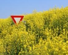 Žemės dienos proga – anti GMO tema