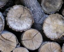 Žalieji sveikina Seimo sprendimą apmokestinti privačių miškų verslą, ir siūlo griežtini jo kontrolę
