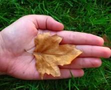 Vilniečiai: užkirskime kelią medžių naikinimui