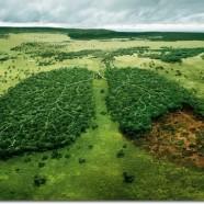 """Specialioje """"Nepatogaus kino"""" programoje – įspūdingiausia pasaulio dokumentika apie miškus"""